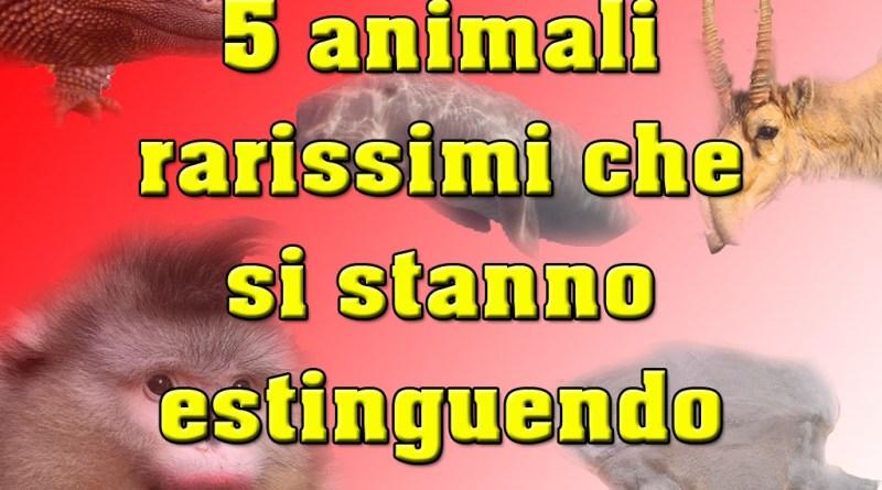 5 animali rarissimi che si stanno estinguendo