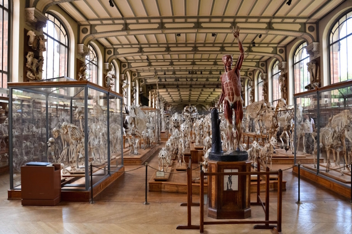Museums for Kids