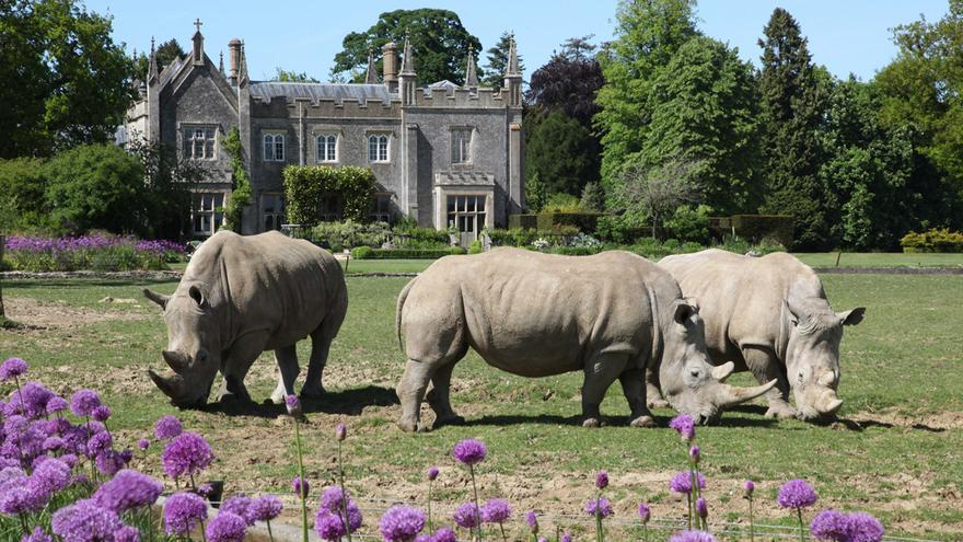 Things to Do in Cotswolds with Kids: Cotswold Wildlife Park