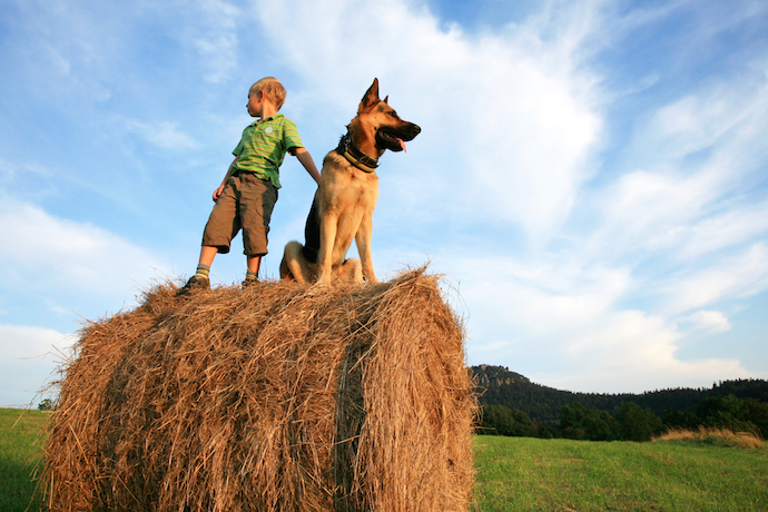 Benefits of Family Pets