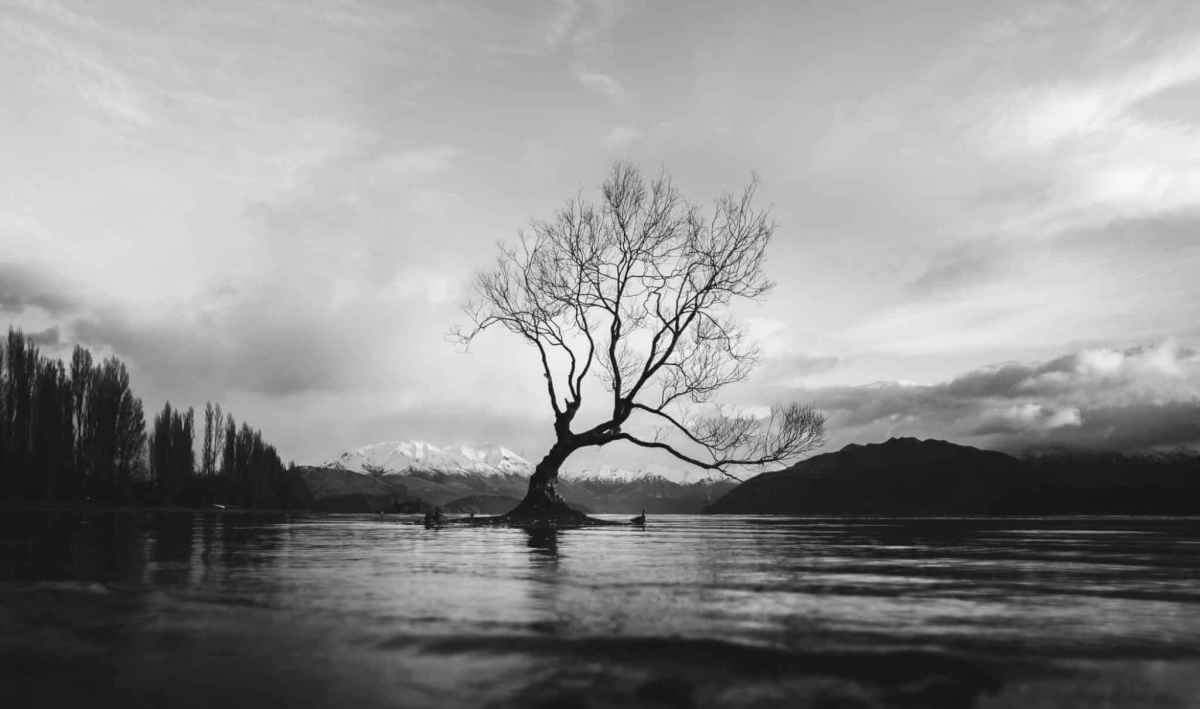 Lonely-Tree | Why Exploring New Zealand Will Be a Trip of a Lifetime