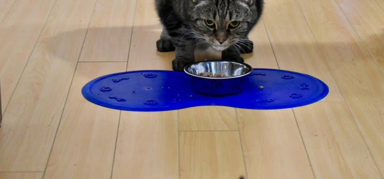 What Bringing Two Cats Together May Have Taught Me About Student Relationships   Lesson 4