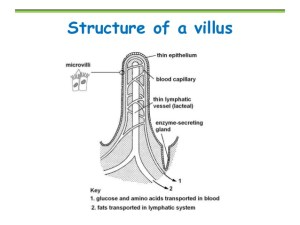 Mr Horrocks' Biology – 6 Human physiology