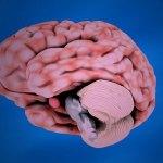 İnsan Beyninin Gizemlerini Öğrenebileceğiniz 5 Kitap
