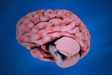 insan-beyninin-gizemlerini-ogrenebileceginiz-5-kitap
