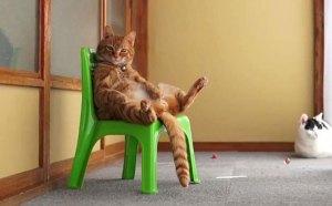 kedi-videolari