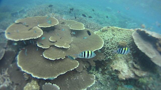 aktiviti snorkeling best di pulau tioman 05