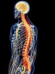 chiropractic-tulang-belakang