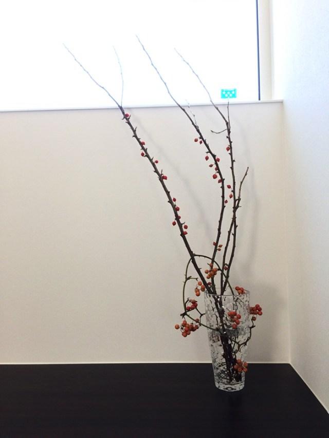 秋っぽい枝