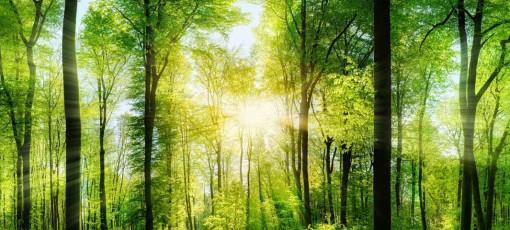 Gießkeramik besteht aus natürlichen Rohstoffen, die recycelt und für einen neuen Herstellungsprozess verwendet werden können.
