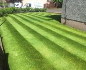 lawn The Lawn Advocates 4