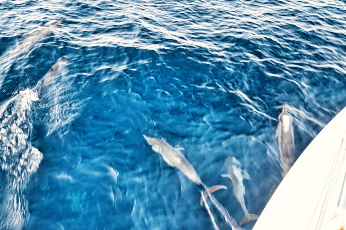 Luxury Dolphin Cruise