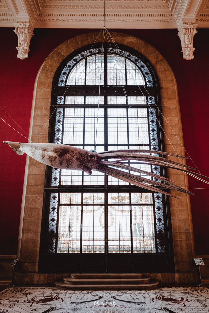 Image of the Squid installation at the Musée Océanographique in Monaco, Côte d'Azur by Mr P Kalu