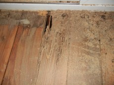 Termite damage in wooden floor