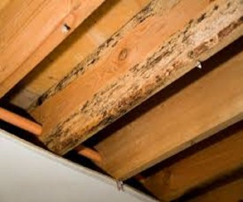 Detect wood rot and mold early to prevent them from damage
