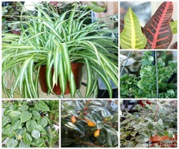 Keep your home plants healthy with these tips