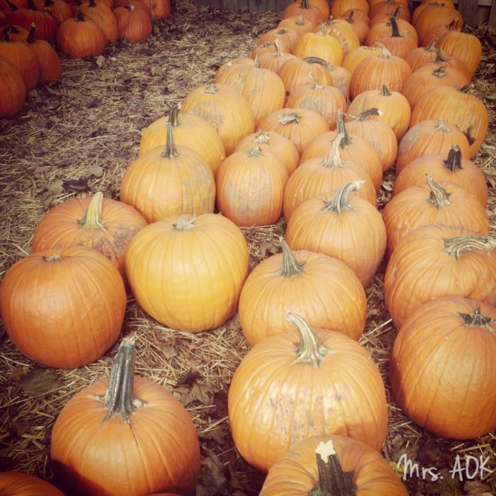 My Favorite Pumpkin Patch