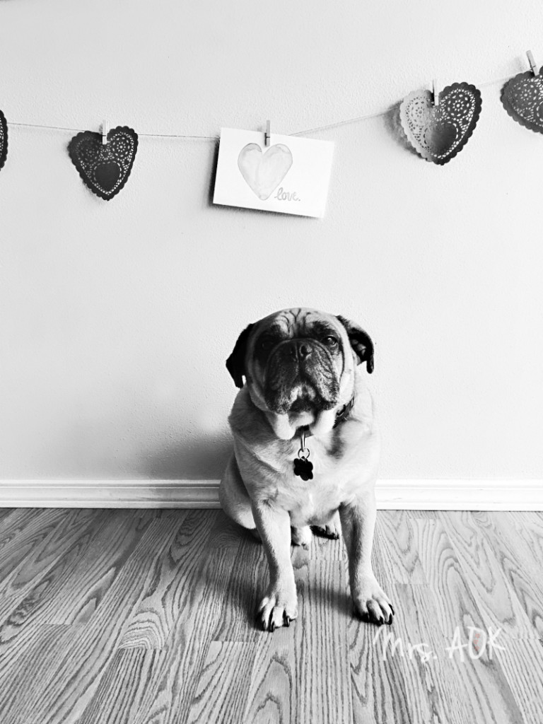 Thank You Notes| Thank you, fur baby, for being the most photogenic dog ever!