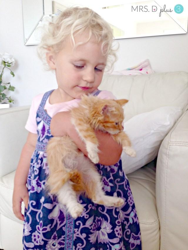 New kittens 7