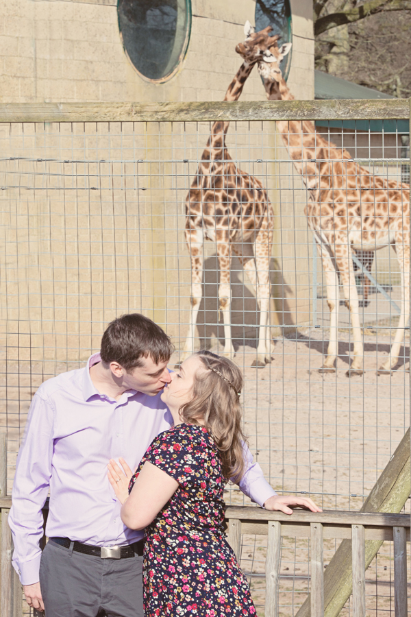 Engagement shoot, marwell zoo, giraffes in love, hannah mcclune photography, blog catch up