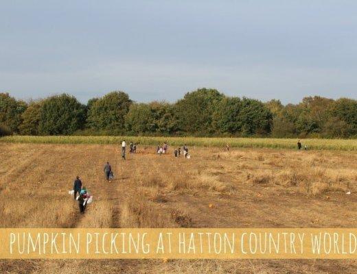 Hatton Country World Pumpkin