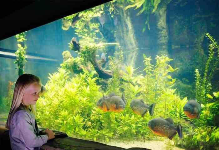 National Sea Life Centre, Birmingham Piranhas