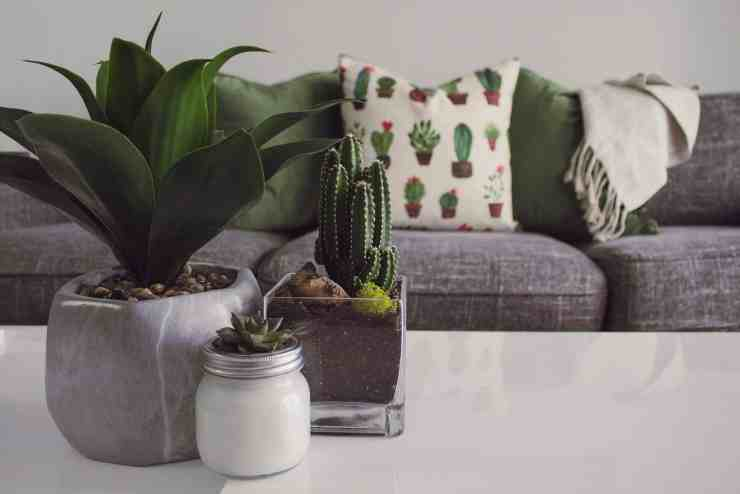 lounge cactus