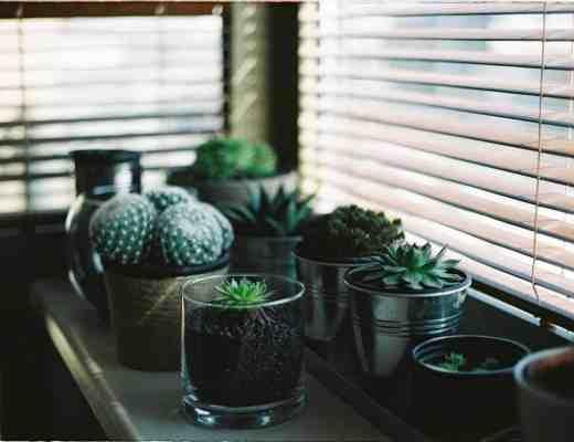 succulents blinds