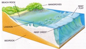 Biotechnology: Coral Reefs