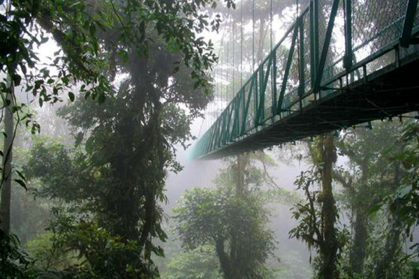 hiking the cloud forest of monteverde in costa rica