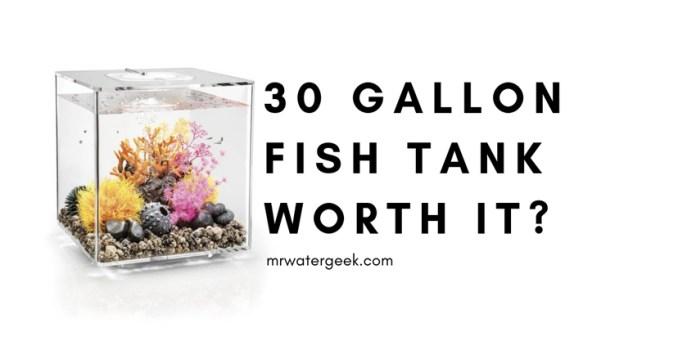 30 Gallon Fish Tank Review