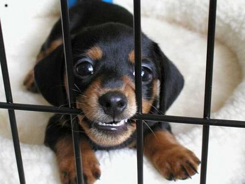 jail_puppy