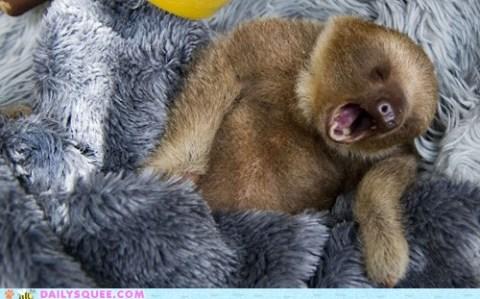 What a Sleepy Sloth!