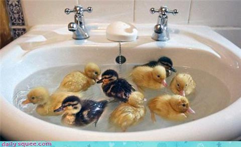 Duckies! They're so sweet!
