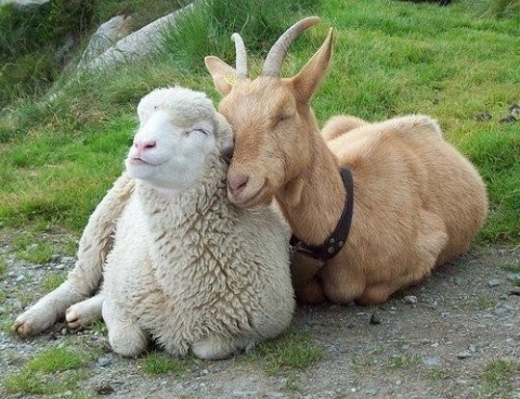 Interspecies Love from Daily Squee