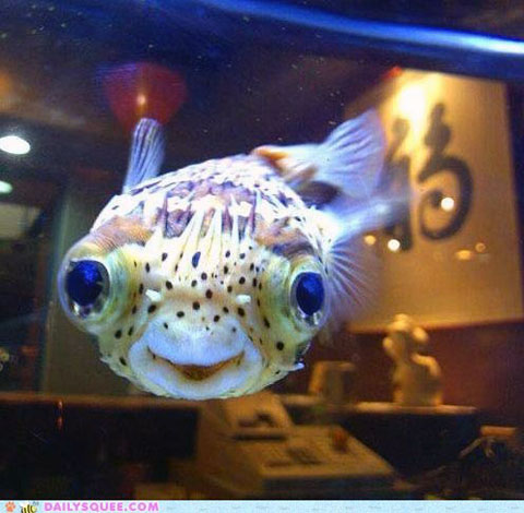 Happy Fish via Daily Squee