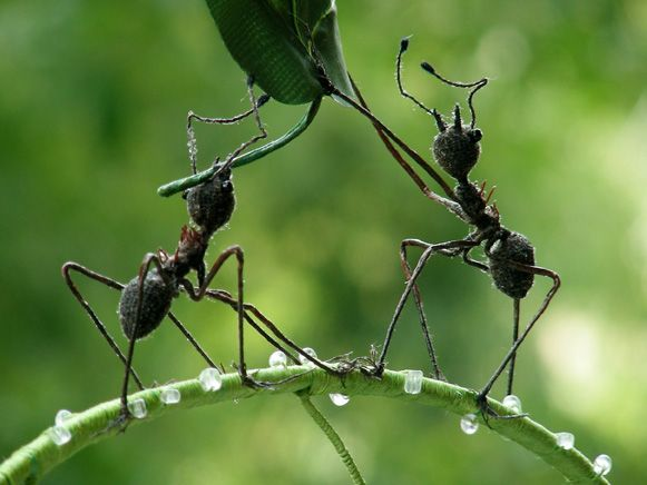 Zora Yin - Ants Soft Sculpture