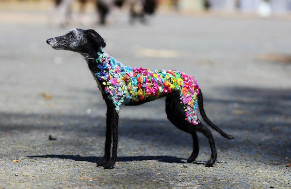 Flower Power Hound in the world.