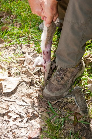 Step on the tail of the squirrel, hold the back legs and pull upward. The front portion of the hide should pull down past the front legs.