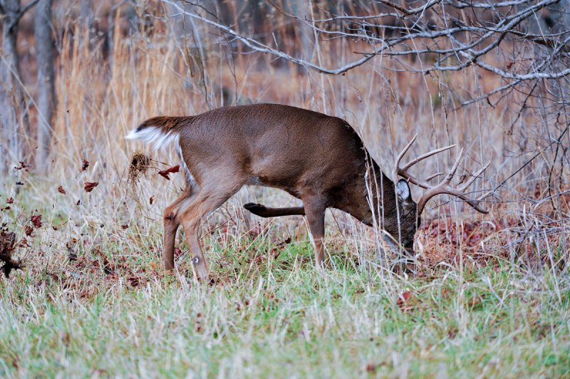 Scrapes serve as a calling card that a buck is looking for receptive does in his area, and by searching the edges of changing landscapes, hunters can find these hot areas.