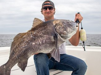 The black drum hold very closely to some of the area's most productive wintertime speckled trout holes.