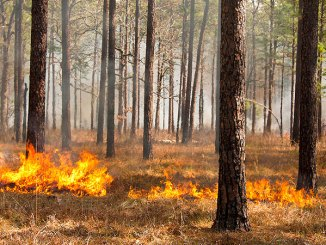 Prescribed burning is one of the most cost-effective ways to improve wildlife habitat, and winter is the prime time to set a controlled fire in the woods.