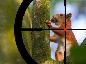 Kids under 16 years of age can hunt squirrels in Mississippi during the Sept 24-30 season.