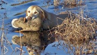 Unlocking the Mississippi duck code