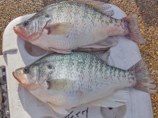 These two Grenada slabs weighed 3.83 and 3.45.