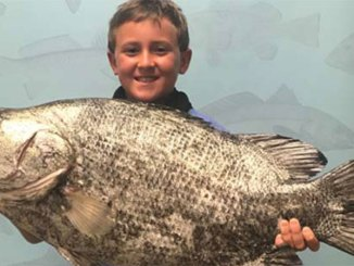 Charlie Russell with his record tripletail. (Photo courtesy MDMR)
