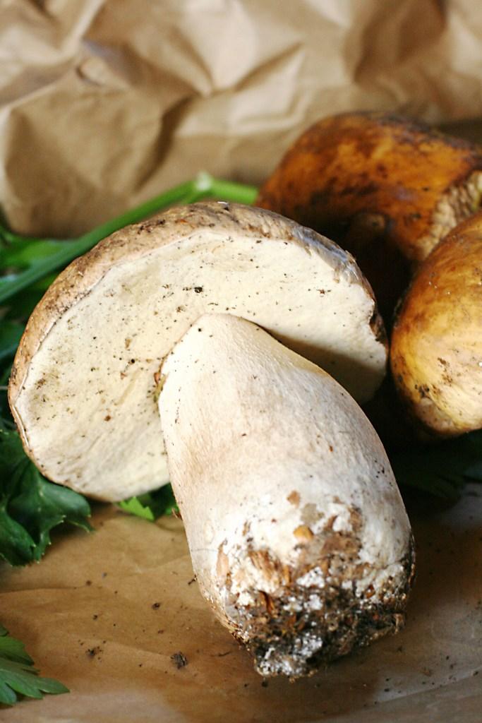 Porcini mushrooms, Ms. Adventures in Italy, by Sara Rosso