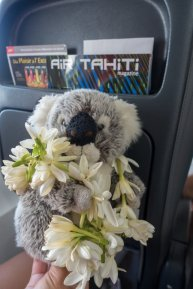 Moi aussi j'ai mon collier de fleurs d'accueil