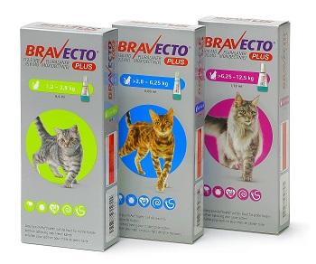 Bravecto Plus Fur Katzen Msd Tiergesundheit Deutschland