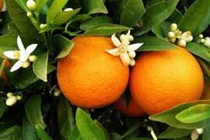 Znaczenie snu kwiat pomarańczy